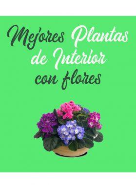Mejores plantas de interior con flor