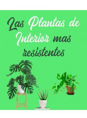 Las plantas de interior mas resistente